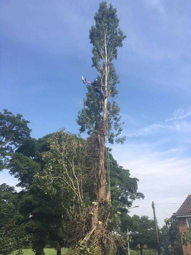 Tree Surgeon Colchester